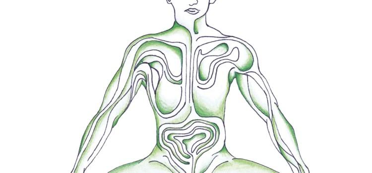 Cultivando la meditación